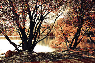 Photograph - Long Shadows. Airy Lace Of Autumn by Jenny Rainbow