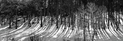 Photograph - Long Shadows - Black And White by Gregory Ballos