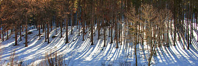 Photograph - Long Shadows - Color by Gregory Ballos