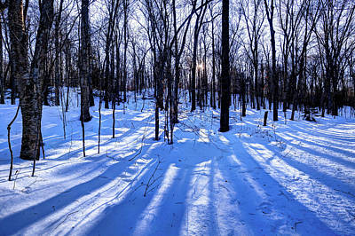 Photograph - Long Shadows On The Snow by David Patterson