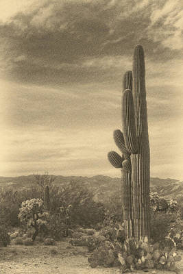 Photograph - Long Standing Cacti Ant by Theo O'Connor