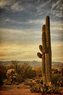 Photograph - Long Standing Cacti Bz by Theo O'Connor