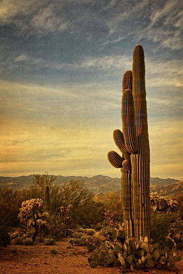 Photograph - Long Standing Cacti Txt by Theo O'Connor