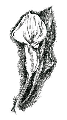 Drawing - Long Stemmed Calla Lily by MM Anderson