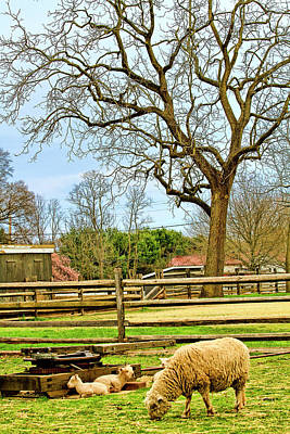 Bo Peep Photograph - Long Street Farms Holmdel New Jersey by Geraldine Scull