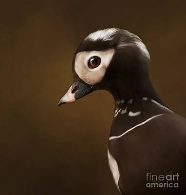 Linda King Digital Art - Long-tailed Duck #2 No Texture by Linda King