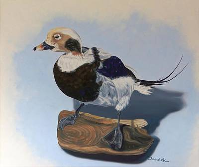 Painting - Long-tailed Duck by Phil Chadwick