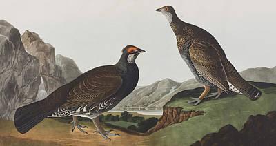 Pheasant Drawing - Long-tailed Or Dusky Grous by John James Audubon