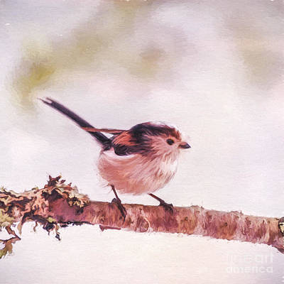 Digital Art - Long-tailed Tit, Aegithalos Caudatus by Liz Leyden