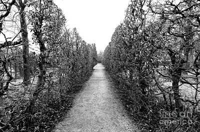Photograph - Long Walk In The Palace Garden by John Rizzuto