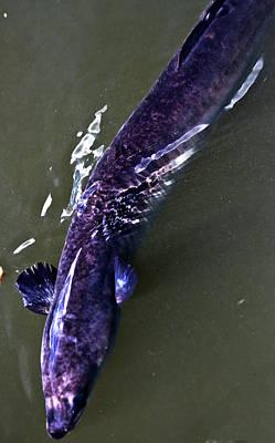 Day Of The Dead Inspired Paintings - Longfin Eel by Miroslava Jurcik