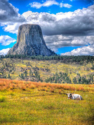 Photograph - Longhorn At Devils Tower by Don Mercer