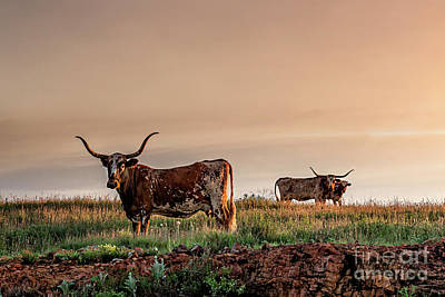 - Longhorn At Sunset by Tamyra Ayles