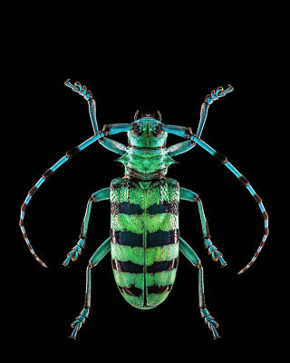 Photograph - Longhorn Beetle by Gary Shepard