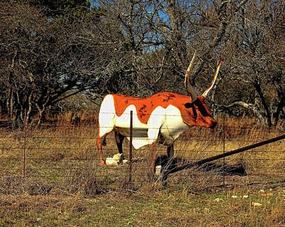 Photograph - Longhorn Country by Judy Vincent