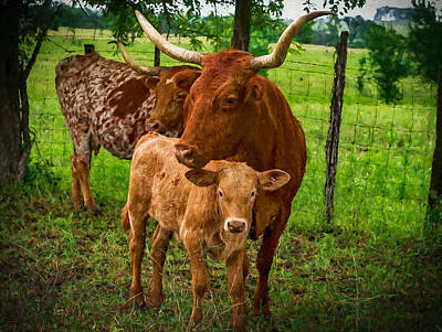 Painting - Longhorn Family - Painting by Ericamaxine Price