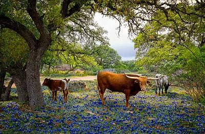 Photograph - Longhorn Heaven by Linda Unger