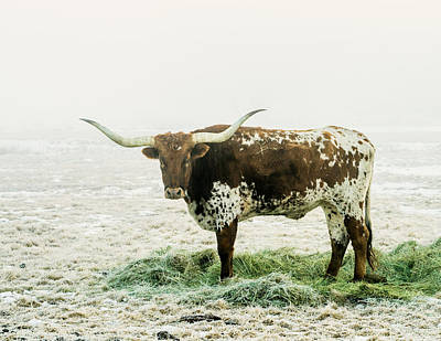 Photograph - Longhorn In The Mist by TL  Mair
