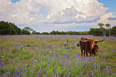 Photograph - Longhorn Love In The Wildflowers by Lynn Bauer