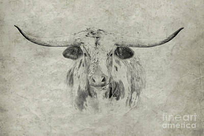 Digital Art - Longhorn by Randy Steele