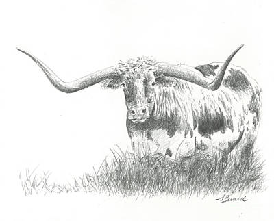 Longhorn Cattle Drawing