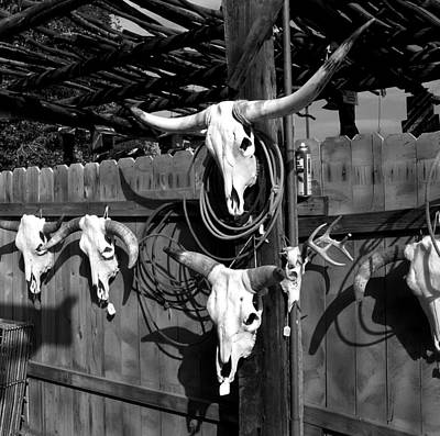 Photograph - Longhorn Skulls by Kathleen Stephens