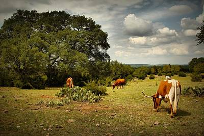 Cow Digital Art - Longhorns Of Texas by Linda Unger
