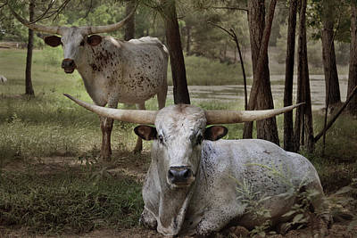 Digital Art - Longhorns On The Watch by Brad Thornton