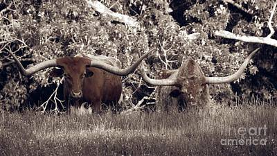 Photograph - Longhorns - Two Head Are Better Than One by Ella Kaye Dickey