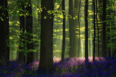 Bluebells Wall Art - Photograph - Longing For Spring by Martin Podt