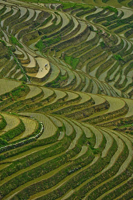One Person Photograph - Longji Rice Fields by Clipworks