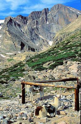 Long's Peak And Llamas Original by Alan Lenk