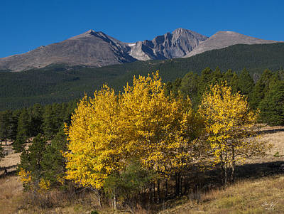Photograph - Longs Peak Aspens by Aaron Spong