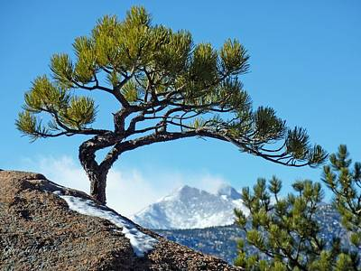 Photograph - Longs Peak Framed By Pines by George Tuffy