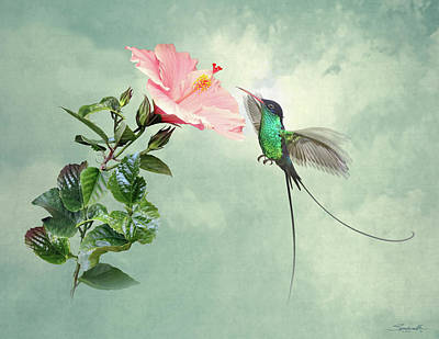 Digital Art - Longtail Hummingbird And Hibiscus Flower by Spadecaller