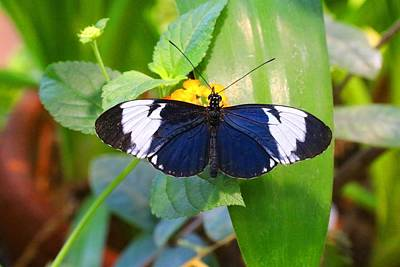 Photograph - Longwing Butterfly by Kathryn Meyer