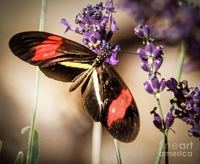 Longwing Butterfly Art Print by Robert Bales