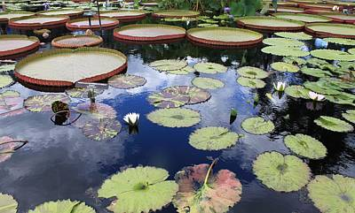 Photograph - Longwood Gardens Longwood Pa by Gerald Salamone