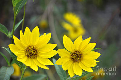 Photograph - Longwood Gardens Meadow Flowers 6 by Andrew Dinh
