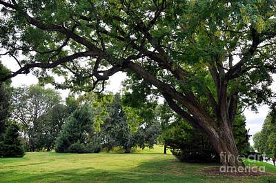 Photograph - Longwood Gardens Tree by Andrew Dinh