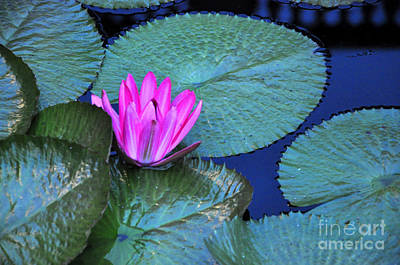 Photograph - Longwood Gardens Water Lotus by Andrew Dinh