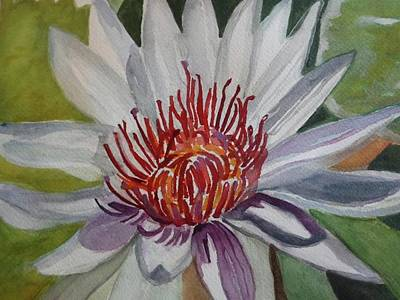 Longwood Gardens Painting - Longwood Water Lily White by Janice Baumann