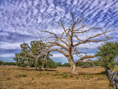 Photograph - Lonley Tree by Dennis Dugan