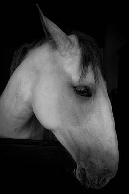 Photograph - Look At Me by Edgar Laureano