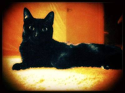 Photograph - Look At Meow by Eddie G