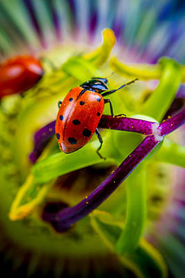 Lady Bug Photograph - Look At The Colors Over There. by TC Morgan