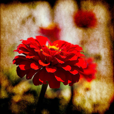Photograph - Look Closer by Milena Ilieva