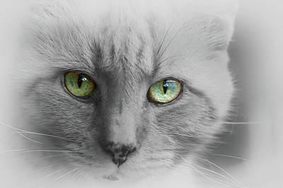 Photograph - Look Into My Eyes  by Brett Christensen