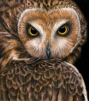 Birds Of Prey Drawing - Look Into My Eyes by Pat Erickson