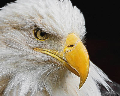 Digital Art - Look Of The Eagle by Ernie Echols
